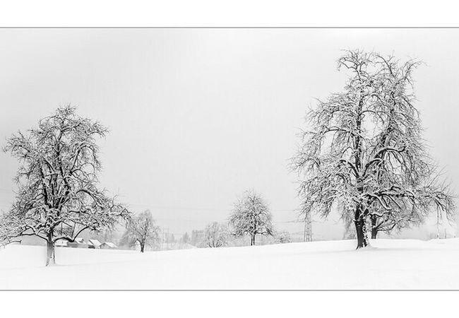 Photoart Black&white Landscapes Taking Photos