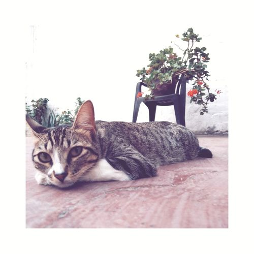 Feels like Monday VSCO Limaperu Pets Portrait Domestic Cat Sitting Full Length Feline Cat Yellow Eyes Sleepy Whisker Domestic Animals Carnivora