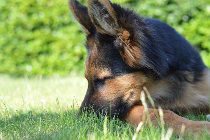 C O L O U R Grass Dog One Animal Domestic Animals Animal Themes Pets Mammal Field Day No People Cute Outdoors Relaxation Close-up Nature