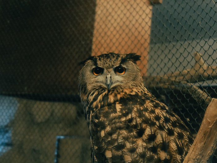 Portrait of owl in cage at zoo