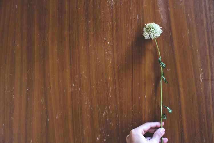 Remaining One Sunlight Holding Nature Human Body Part Hand Dry Flower  Dried Winter White Flower
