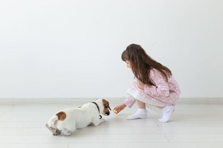 Dog lying on floor against white wall