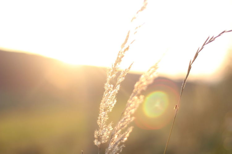 Close-up of sun shining through plants