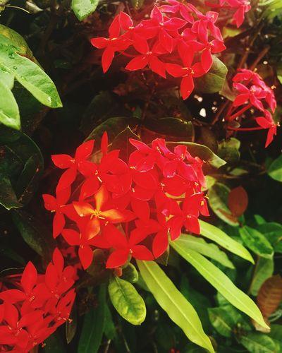 Cozumel Wildlife Flower