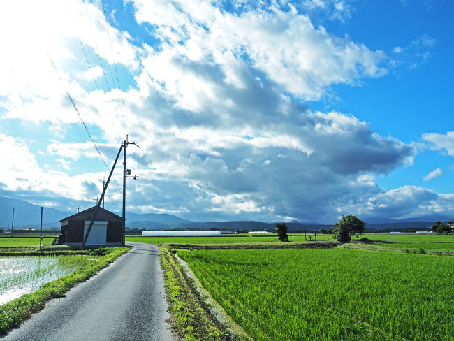 A landscape of a beautiful country road (綺麗な田舎道の風景) Ad Beautiful Blue Color Copy Space Country Road Daytime Green Nature Quiet Road The Countryside Black Color Blue Sky Brown Countryside Landscape Margin No Person Nobody Paddy Field Silence Text Space White 水田 田舎道