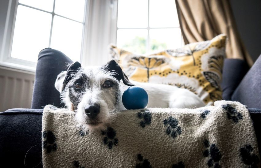 His chair Dog Pets Indoors  One Animal Animal Themes Window Domestic Animals Home Interior Dogs Of EyeEm Pets Corner Pet Photography  Jackrussell Portrait Day Bed Lying Down Mammal No People Bedroom Close-up Pet Portraits