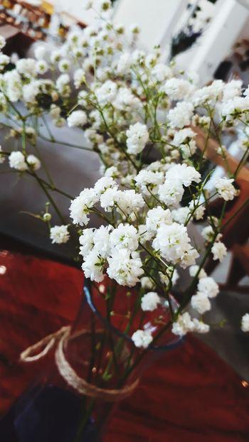 Flower Head Flower Bouquet Blossom Close-up Plant
