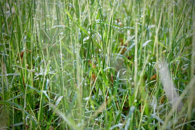 Plant Green Color Growth Grass Field Land Nature Selective Focus Beauty In Nature Day No People Tranquility Freshness Close-up Full Frame Outdoors Backgrounds Fragility Vulnerability  Blade Of Grass