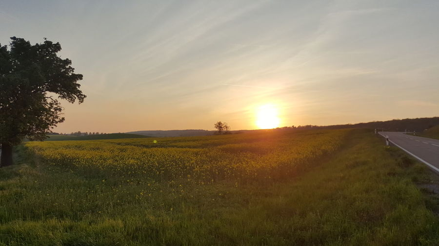 Field Sunset Nature Landscape Beauty In Nature Sunlight No People Spring No Filter Sonnenuntergang Natur Frühling Raps Rapsfeld