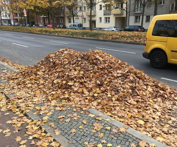 Walking Around Taking Photos Autumn Leaves Piled Up Herbst My Berlin  🍁