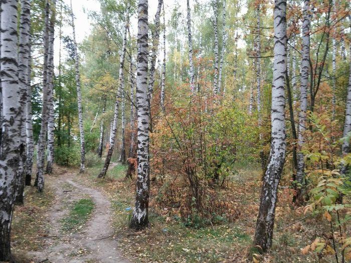 в лесу Camping