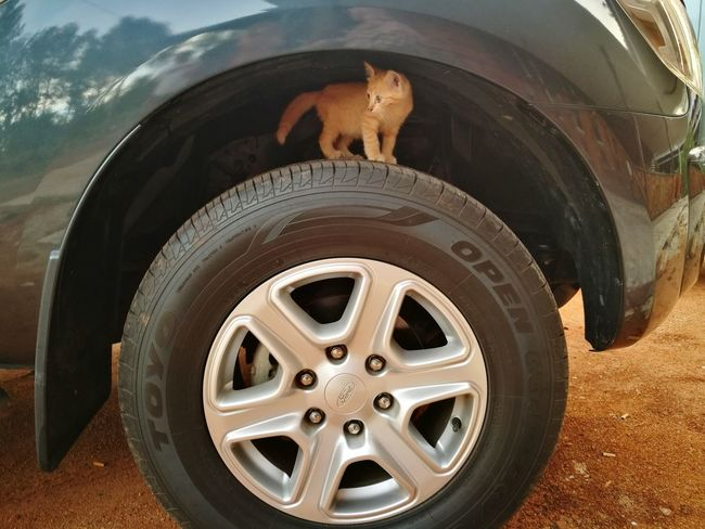 Le chaton is ready to tackle life! EyeEm Selects Tire Wheel 4x4 Outdoors No People Transportation Meow🐱 HuaweiP9 Paws And Purrs Whiskers