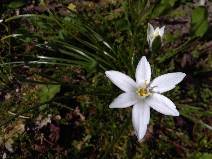 Flower Milkstar Urban