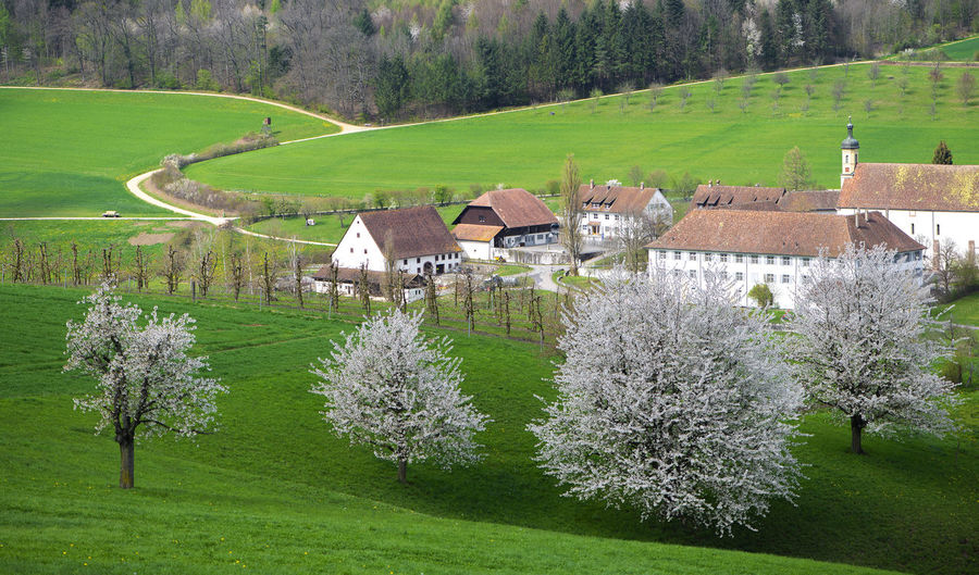 Scenic view of trees and houses on field