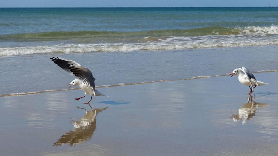 Bird Water Wave