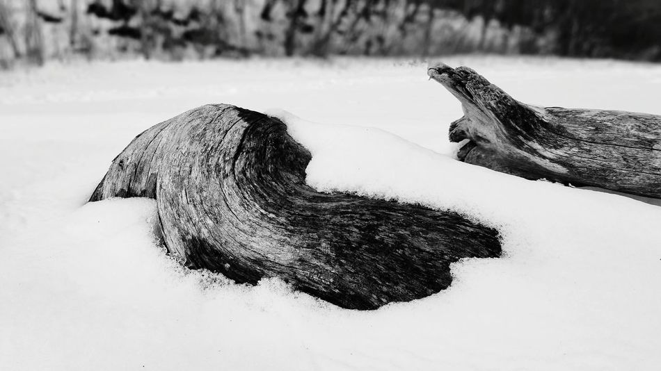 Winter Beauty In Nature Landscape Lakeshore No People Snow Driftwood Beach EyeEm Selects Side View