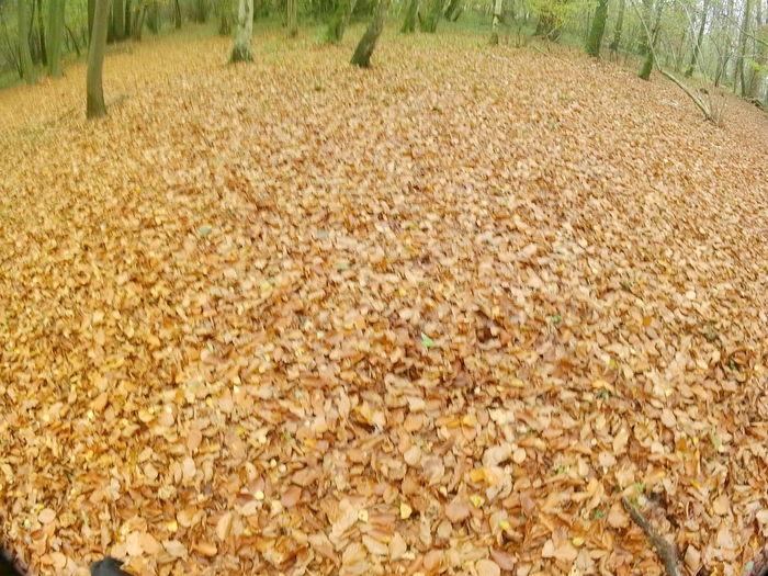Dry leaves on field