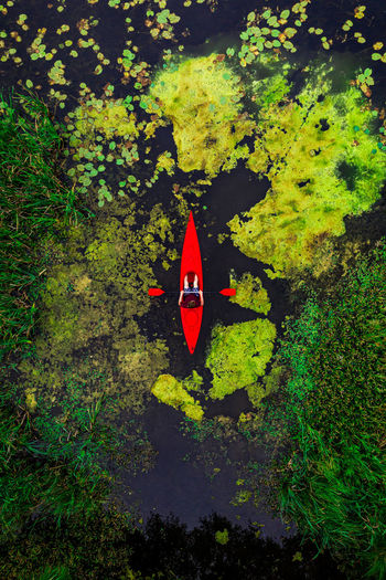 High angle view of red leaves floating on water