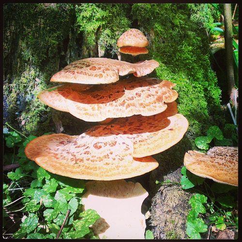 Not mushroom