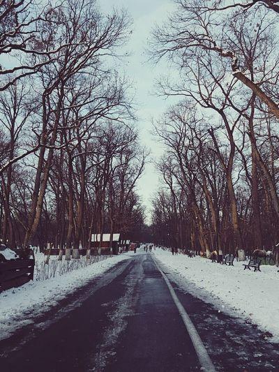 Tree Snow The