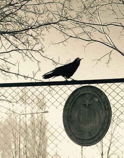 Reaven Bird Photography Popular Photos Bird