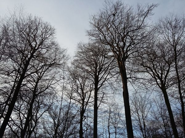 Hi say the Trees. · Germany Friesland Frisia Forest TreePorn Tree_collection  Winter Trees Winter Clouds And Sky