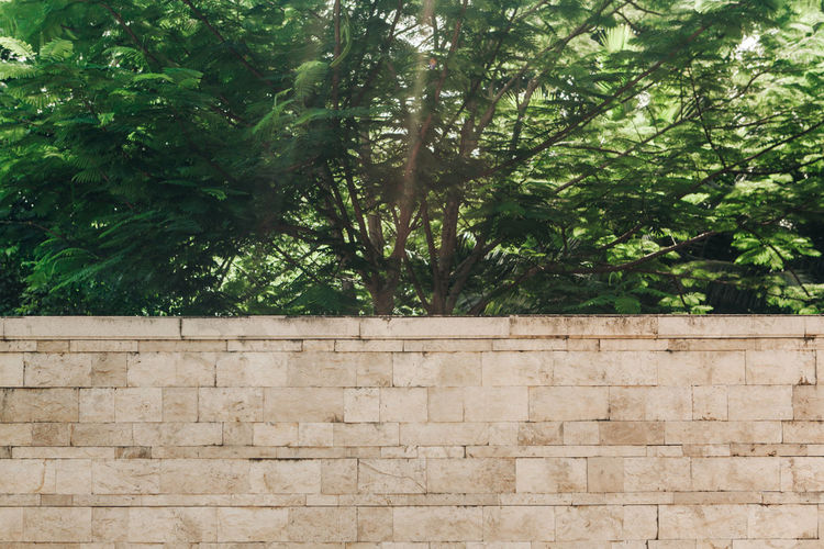 Low angle view of stone wall in forest