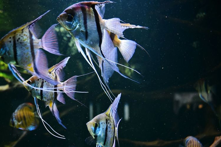 Fish Aquarium