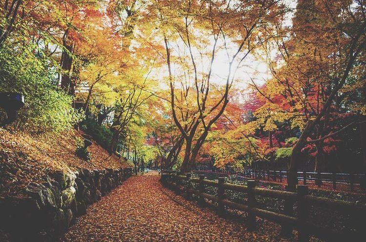 Japan Japanese  Trees Tumblr