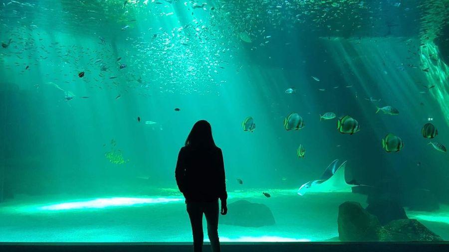 Underwater 🐠 Woman France Nausicaa Water Sea Real People Underwater Vertebrate One Person Fish Animals In The Wild Nature Animal Wildlife Animal Themes Animal Aquarium Marine Swimming Lifestyles