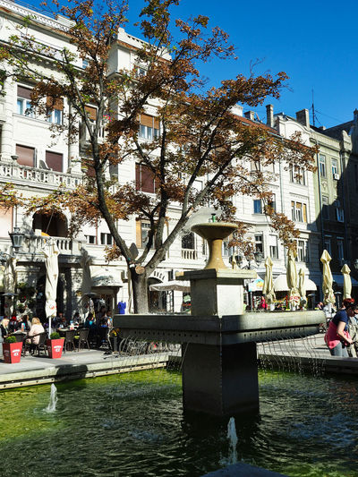 European Cities Novi Sad Serbia Eastern Europe Balkans Europe Outdoors Street Photography Travel Destinations Clear Blue Sky Architecture Public Places Facades Sunlight Built Structure Building Exterior Autumn colors Fountains Water Tree Plant Incidental People Day Sunlight And Shadow City