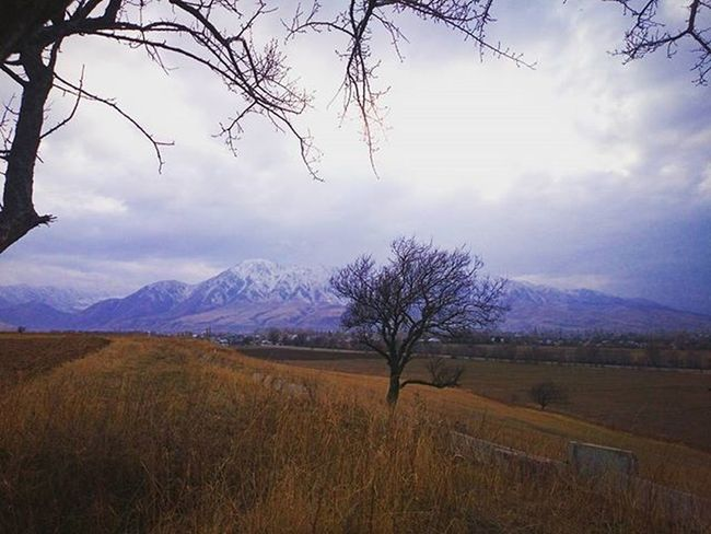 Последняя схватка осени с зимой 🍂 L'automne et l'hiver s'enlacent... AutumnVSwinter Automnehiver Paysage Wild Landscape Natgeo Intothewild Champs Homeland Kyrgyzstan Uneamevagabonde TravelIsLife Telling Stories Differently Showing Imperfection The Great Outdoors - 2016 EyeEm Awards The Great Outdoors With Adobe Original Experiences 43 Golden Moments