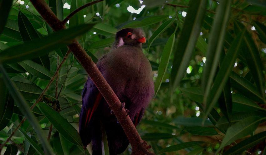 Animal Animals In The Wild Beauty In Nature Bird Bird Photography Birds Foto Fotografia Fotografie Fotography Green Color Nature One Animal Photo Style