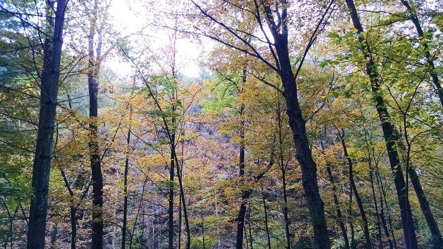 Motox EyeEm Nature Lover Eyeem Michigan Fall_collection Nature My Running View Fall Beauty