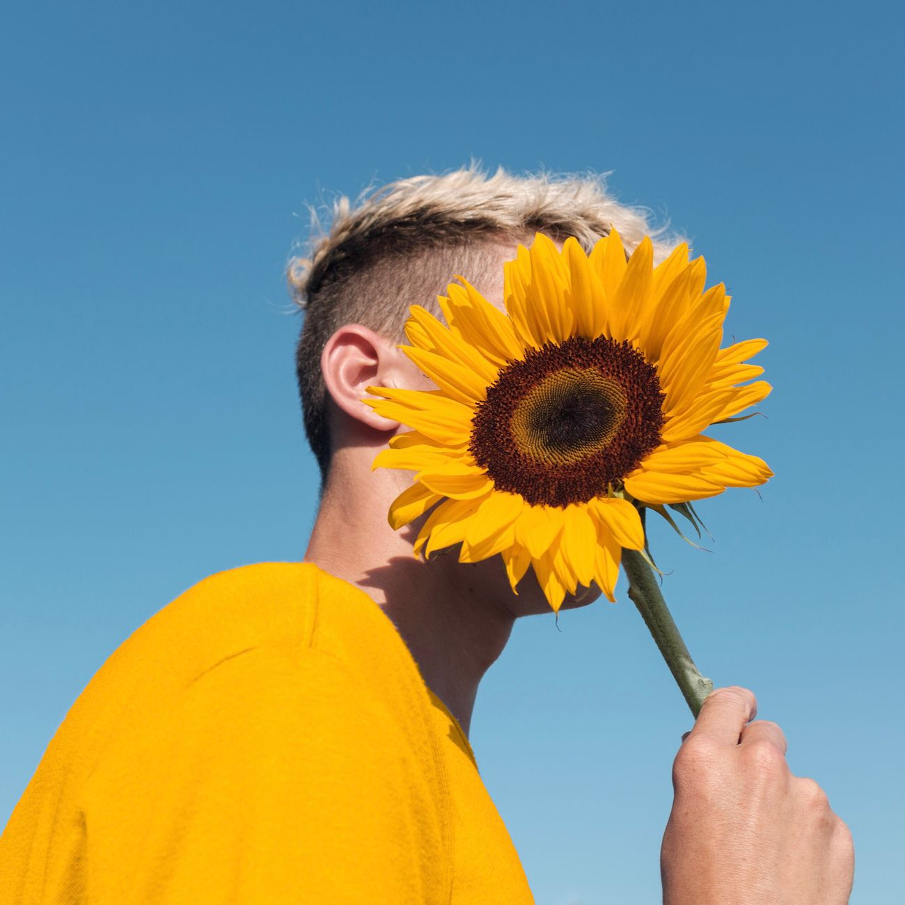 flower, yellow, sunflower, fragility, real people