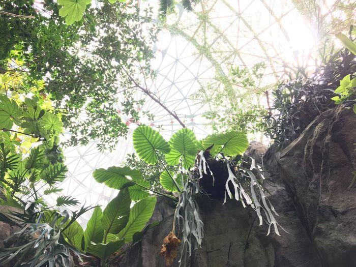 Botanical garden 植物 台灣 台中 Taiwan Taichung 科博館 植物園 Botanical Garden Plant
