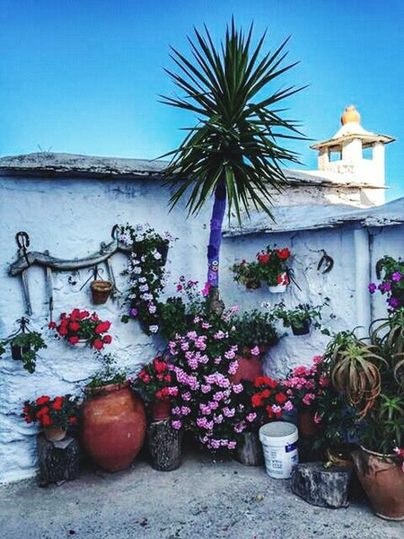 Andaluciaviva Andalucía Alpujarra Alpujarras EyeEm Best Shots Eye4photography  EyeEm Gallery Eye Flowers Flower Flowers,Plants & Garden Flores Flor Flower Collection Flowers, Nature And BeautyAndalucia Spain