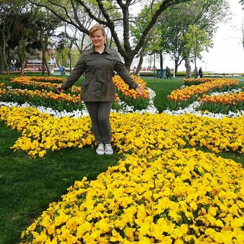 Lale Festivali Lale Devri Lale Festival In Istanbul Lale Park Laleh Park Lale'i_İstanbul Lalefestivali Angelsday Lale Zamanı
