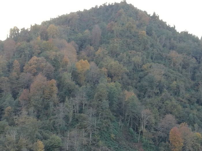 Sonbaharda dağlarim Tree Nature Growth Lush Foliage Day No People Landscape Beauty In Nature Outdoors
