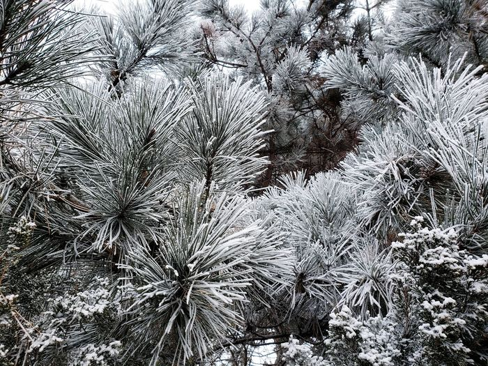 Winter ❤️ Frost Minneapolis Frosty Beauty In Nature Backgrounds Full Frame Abstract Close-up Snow Covered White Winter Snow Cold Frozen Cold Temperature