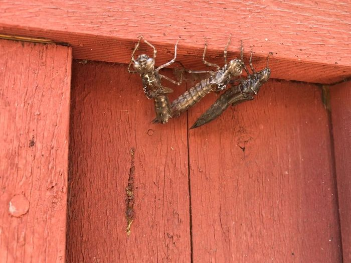 Close-up of an insect on wall