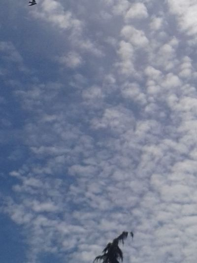 Cloud - Sky No People Sky Animal Themes Nature Blue Bird Scenics Beauty In Nature Funky Treetop