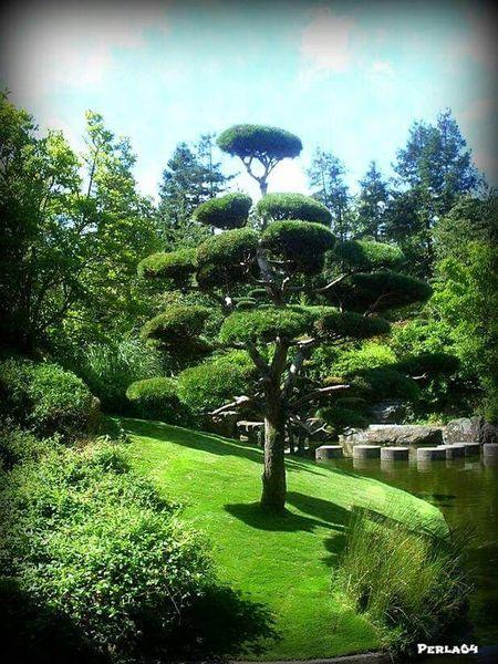 Japonese garden Nantes .... Getting Inspired Taking Photos EyeNatureLover France Colours Of The Orient Zen Nature