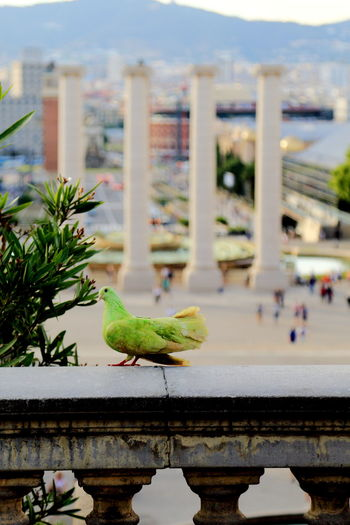 Close-up of bird perching on city against sky