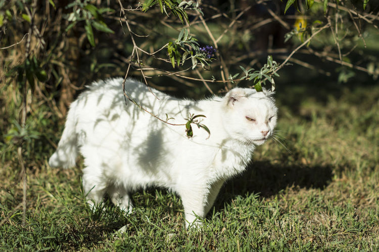 Abused Abuse Abused Cat Abused Pet Animal Themes Close-up Day Domestic Animals Domestic Cat Feline Field Grass Mammal Nature No People One Animal Outdoors Pets