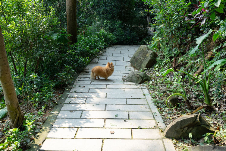 Cat on footpath amidst plants