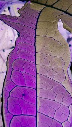 Maximum Closeness Leaf Vein Inverted Photography Photosynthesis Leaf Patterns🍂 Leaf Veins