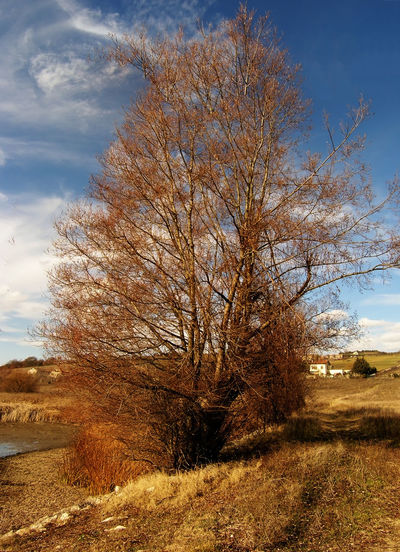 Autumn Autumn Colors Clouds Fall Leaves Landscape Natur Colors No People Outdoors Tranquil Scene Tree_collection