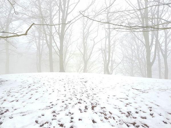 Tree Snow Snowing Cold Temperature Bare Tree Winter Landscape