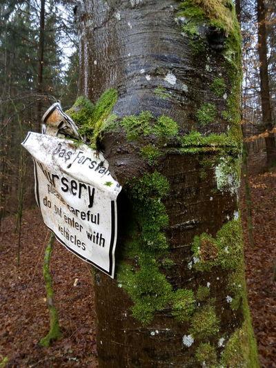Tree Outdoors No People Nature Schild Moos Baumstamm Baum Flechte Wald Waldweg Natur Eingewachsen Rinde Bqaquaris Bq